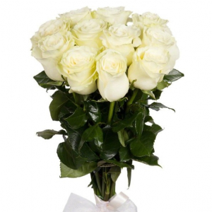 11 роз белые