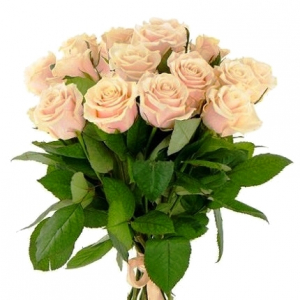 15 роз кремовые (60см)