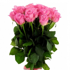 11 роз розовые (60см)