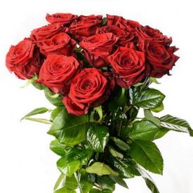 15 роз красные